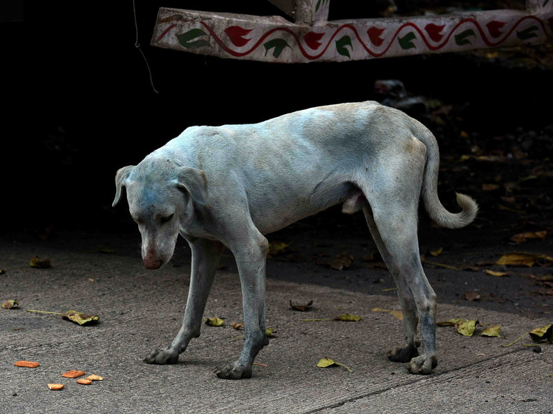 What's Making These Dogs In Mumbai Turn Blue?—NPR Goats and Soda
